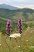 montagnes et fleurs photo