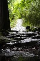 sentier forestier photo