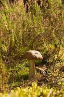 champignon forestier photo