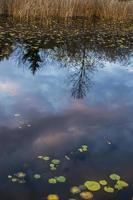 réflexion. photo