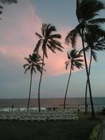 puesta de sol tropical en playa de brasil con palmeras photo
