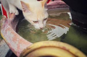 chat boire de l'eau photo