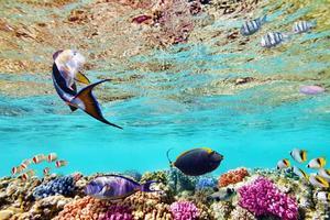 monde sous-marin avec des coraux et des poissons tropicaux.