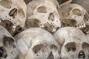 crânes photo