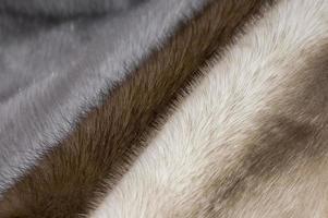 trois couleurs de fourrure de vison photo