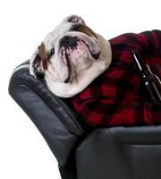chien potable photo