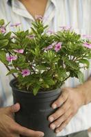 homme tenant une plante en pot photo