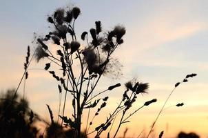 coucher de soleil dans l'herbe photo
