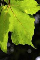 feuille verte photo
