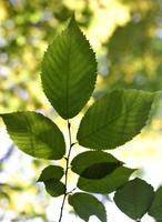 feuilles rétroéclairées