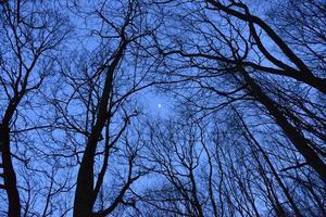 lune à travers les arbres photo