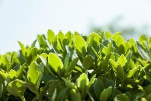 feuilles rétroéclairées photo