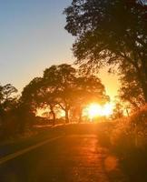 arbre rétro-éclairé photo