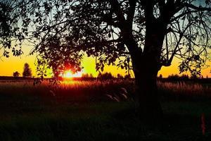 lever du soleil arbre solitaire