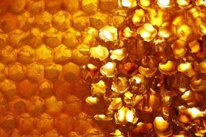 nid d'abeille photo