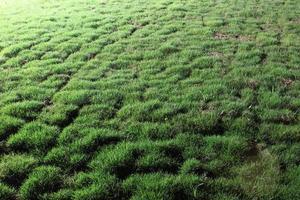 pelouse de nuit