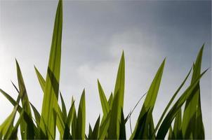 herbe contre le ciel bleu photo