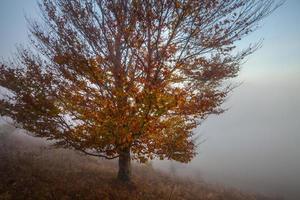 arbre automne, sur, pré sec, sur, ciel bleu, fond