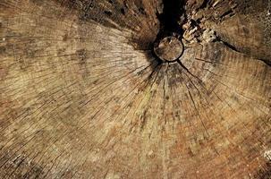 fond d'anneau d'arbre