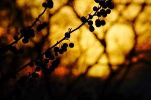 crépuscule à travers les branches: coucher de soleil spectaculaire arbre rétro-éclairé