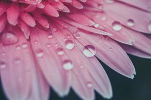 fleurs avec effet de filtre style vintage rétro