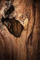 fond bois