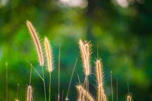 herbe colorée lumineuse