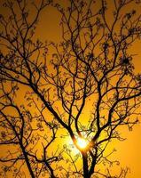 arbre, silhouette, le lever du soleil photo
