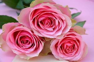 Fond de copie vide peint rose avec des roses photo
