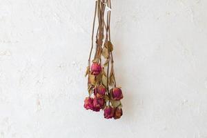 Roses séchées fleurs cadre espace copie vierge sur mur blanc