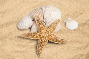 coquille, étoile de mer, été photo