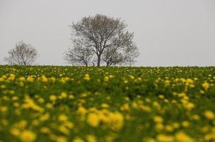 la vie après la mort - l'hiver se transforme en printemps photo