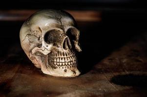 crâne humain nature morte fond