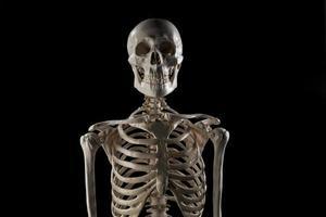 Squelette humain photo