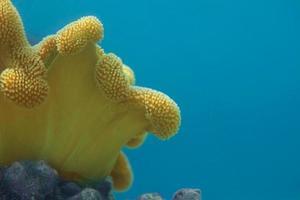 gros plan de corail photo