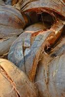 cosse de noix de coco en gros plan