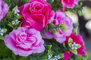 gros plan bouquet rose