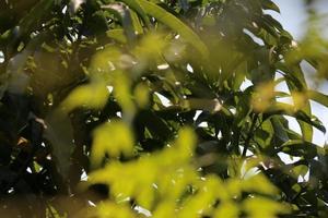 feuille bokeh modélisée