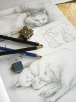 croquis de chats photo