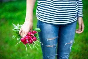 radis frais photo