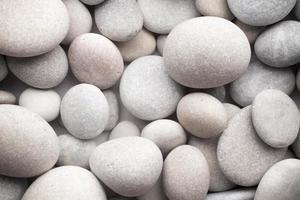 pierre. photo