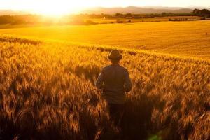 Champ jeune homme adulte debout regarde le coucher du soleil en paix