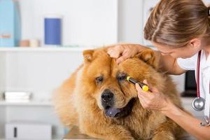 clinique vétérinaire photo
