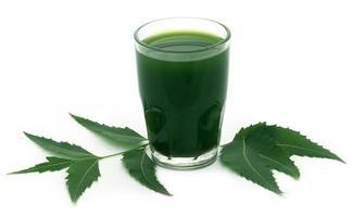 feuilles de neem médicinales avec extrait photo