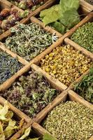 herbes médicinales photo