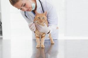 vétérinaire donnant une injection au chat photo