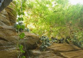 jungle photo