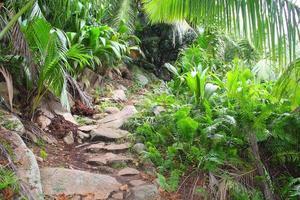 jungle, forêt tropicale photo