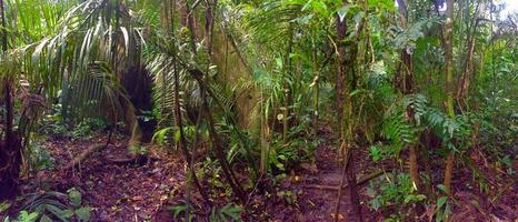 vue sur la jungle