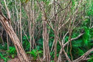 contrastes de la jungle